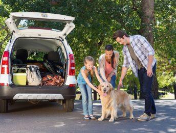 Trasporto animali domestici in auto e moto