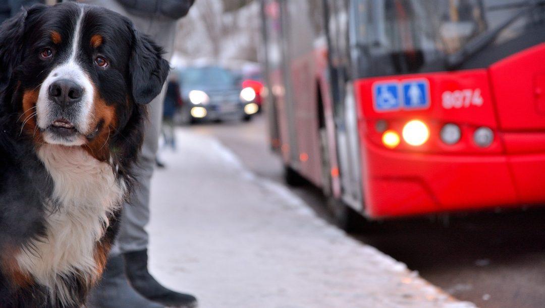 mezzi pubblici cani gatti