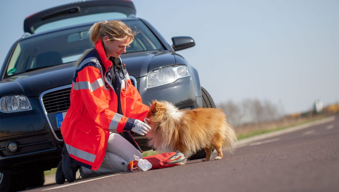 Obbligo soccorso animali