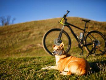 Si può andare in bici con il cane al guinzaglio